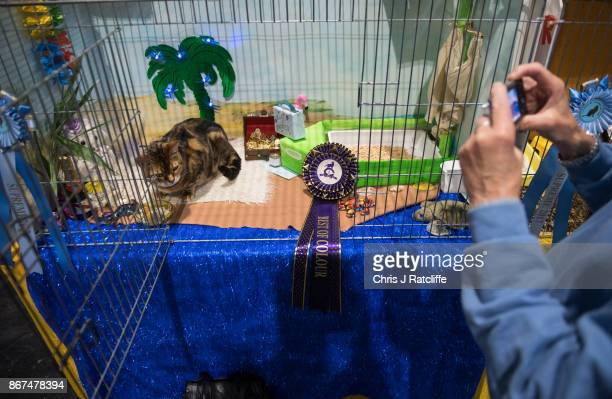 A woman takes a photo of her cat after it wins best in colour during the Supreme Cat Show on October 28 2017 in Birmingham England The oneday Supreme...