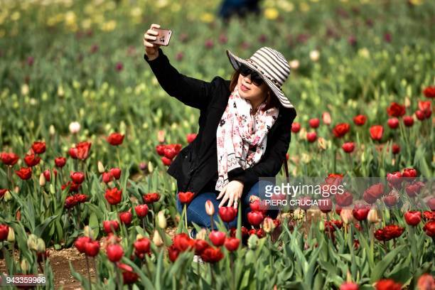 A woman takes a selfie with her mobile phone surrounded by tulips at the 'Upick' garden a field of 350000 tulips from 312 varieties in Cornaredo in...