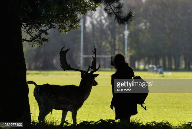 Woman takes a selfy with a wild deer during sunny spring weather in Phoenix Park, Dublin. On Friday, 2 April 2021, in Dublin, Ireland.