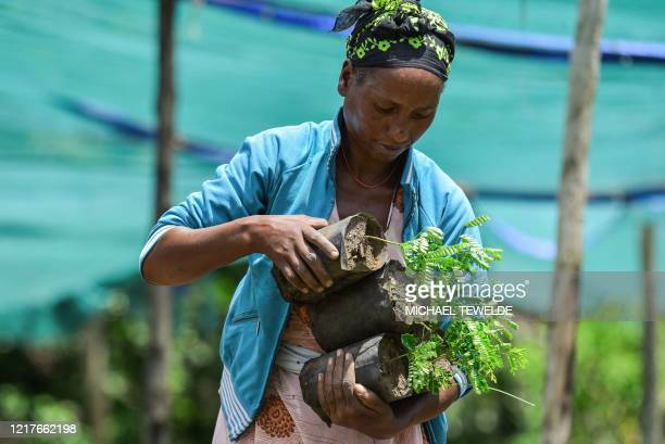 A woman takes care of seedlings at a nursery outside of Buee about 100km from Addis Ababa in southern Ethiopia on June 1 2020 ahead of World...