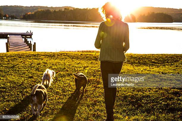 Woman takes dogs for a walk in the nature