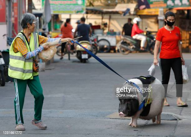 Woman takes her big pet pig for a walk on a lead at a village in Nonthaburi province, on the outskirts of Bangkok. The pig has lived with her at her...