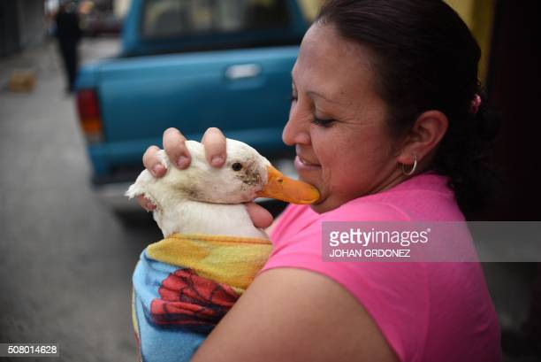 A woman takes her duck outside while a Health ministry worker fumigates her home against the Aedes aegypti mosquito vector of the dengue Zika and...