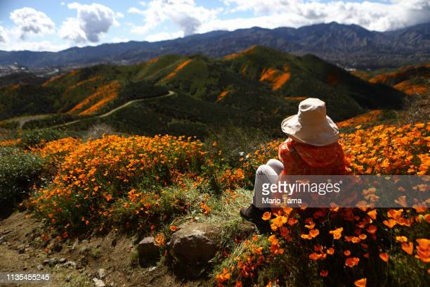 A woman takes in the view of a 'super bloom' of wild poppies blanketing the hills of Walker Canyon on March 12 2019 near Lake Elsinore California...