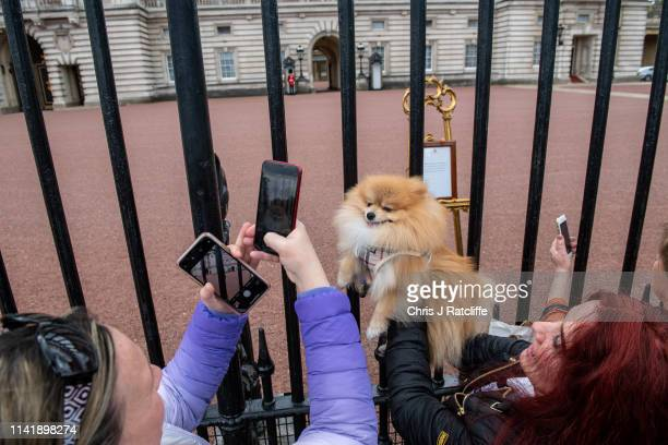 A woman takes photos of 'Prince' a Pomeranian dog next to the official notice of the birth of a baby boy to the Duke and Duchess of Sussex outside...