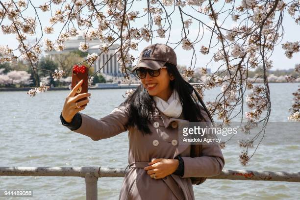 A woman takes selfie with the blooming cherry trees which were sent from Tokyo after it was selected as 'town twinning' in 1912 along the Tidal Basin...