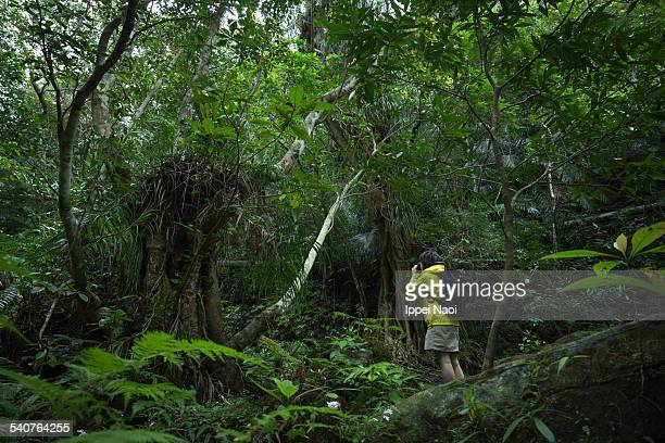 woman taking a photo in jungle, okinawa, japan - ippei naoi stock photos and pictures