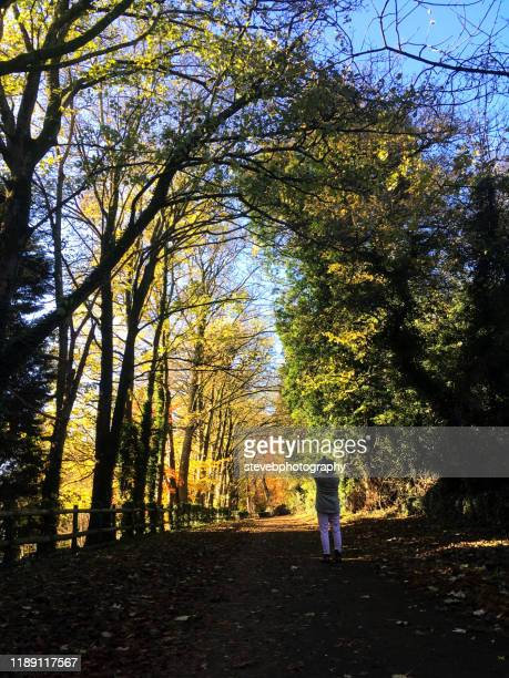 woman taking a photograph - stevebphotography stock pictures, royalty-free photos & images