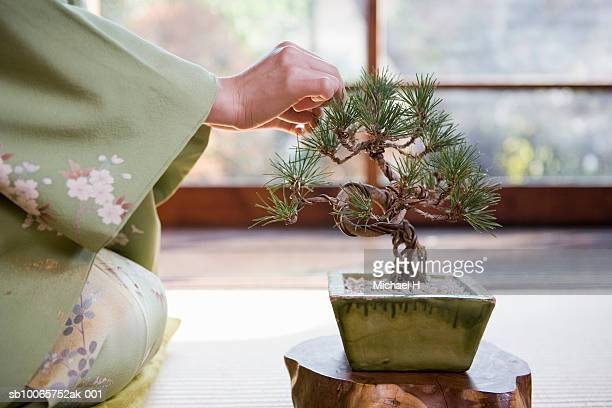 woman taking care of bonsai plant - bonsai tree stock pictures, royalty-free photos & images