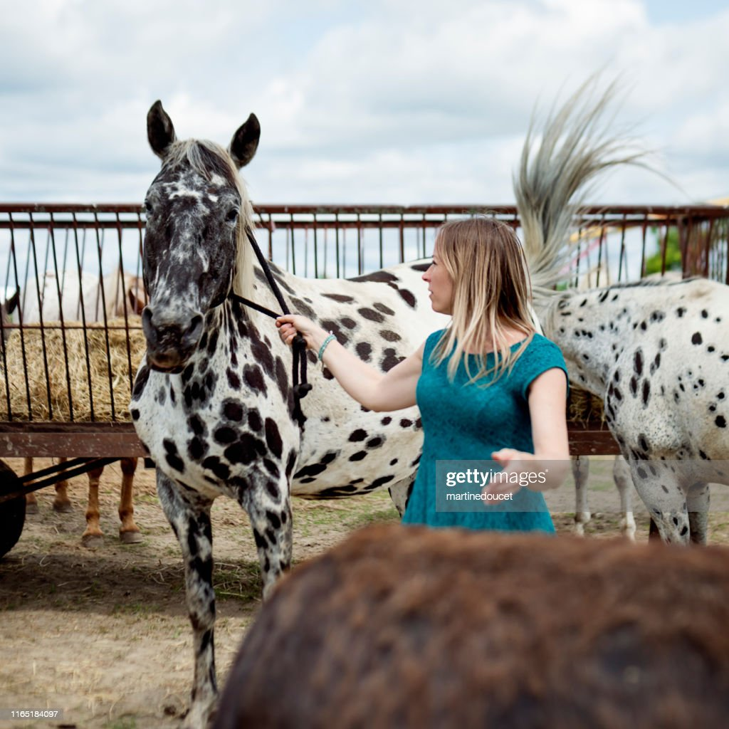 Woman taking care of horses in a shelter. : Stock Photo
