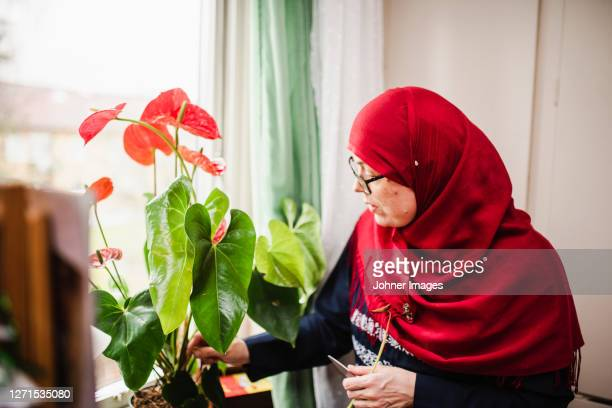 woman taking care of plant - västra götaland county stock pictures, royalty-free photos & images