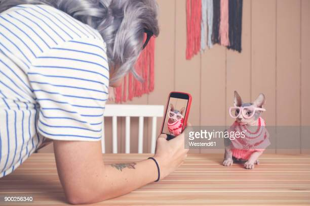 Woman taking cell phone picture of Sphynx cat wearing pullover and funny glasses