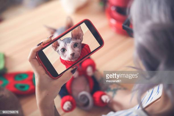woman taking cell phone picture of sphynx cat wearing pullover - puss pics stock photos and pictures