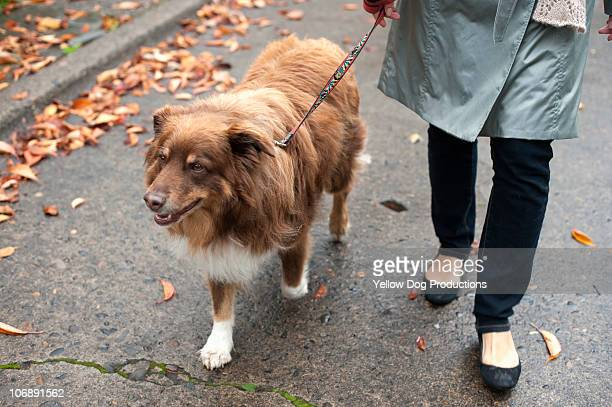 Woman taking her dog for a walk on a fall day