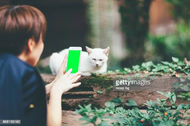 woman taking photos of cat - puss pics stock photos and pictures