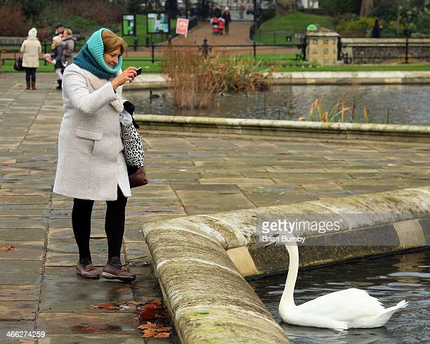 CONTENT] Woman taking picture of swan in Hyde Park in London UK