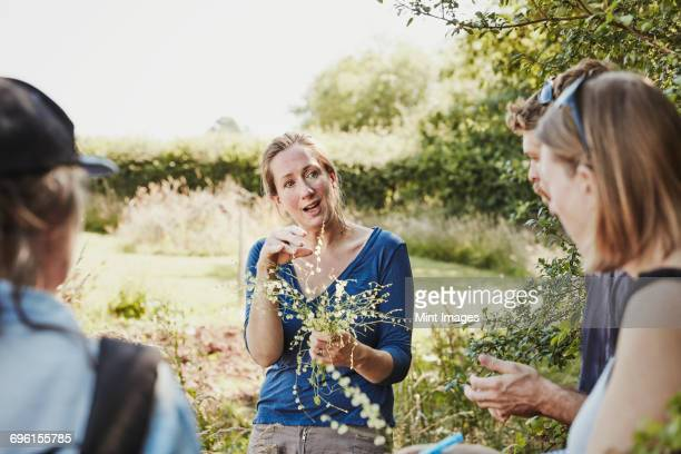 a woman talking to two people about safe edible plants, holding freshly gathered plants. - foerageren stockfoto's en -beelden