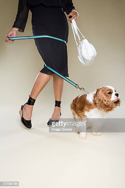 woman tangled up in dog lead - dog knotted in woman stock pictures, royalty-free photos & images