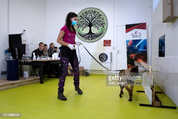 Woman teaches her dog to find a piece of fabric that was infected with the COVID-19 bacteria during a training session, on May 13 in Maison-Alfort,...