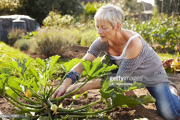 Woman tending allotment
