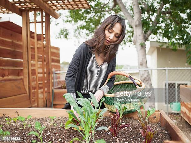 Woman tending her garden in urban back yard