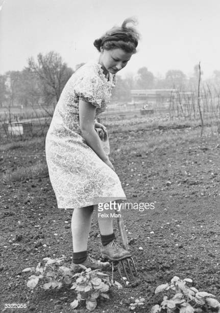 A woman tending to her vegetables on her allotment at Hampstead Heath Original Publication Picture Post 846 Hampstead Heath Allotments unpub