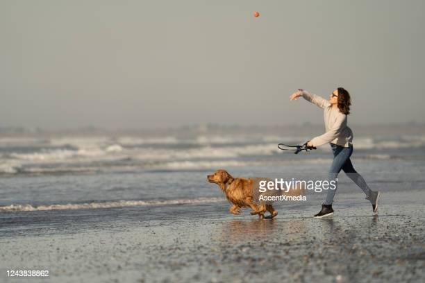 woman throws ball for her golden retriever on the beach - arremessar imagens e fotografias de stock