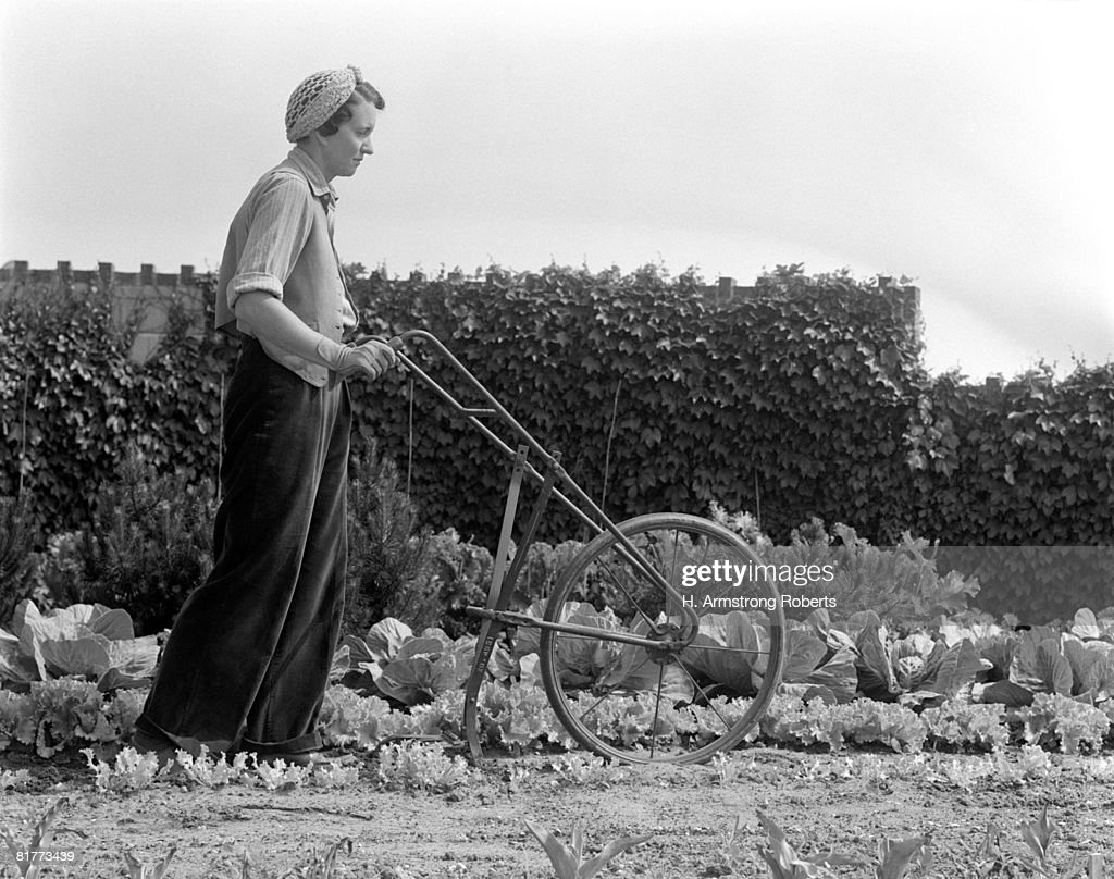 Woman Tilling Soil With Hand Pushed Tiller Equipment, On A Victory Garden Farm Growing Vegetable, Lettuce, And Cabbage In Rows.  : Foto de stock
