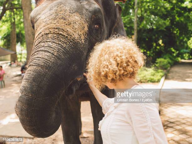 woman touching elephant at park - bortes stockfoto's en -beelden