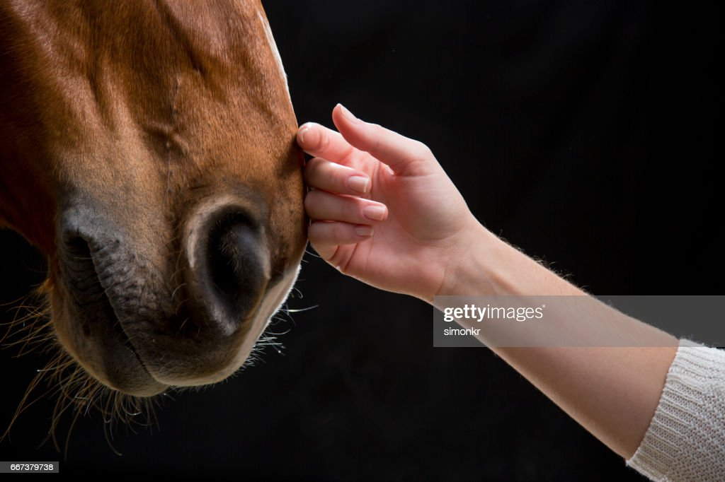 Woman touching horse : Stock Photo