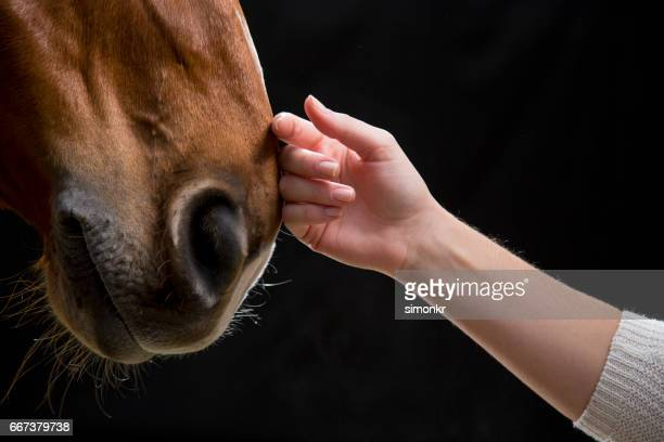 woman touching horse - love emotion stock pictures, royalty-free photos & images