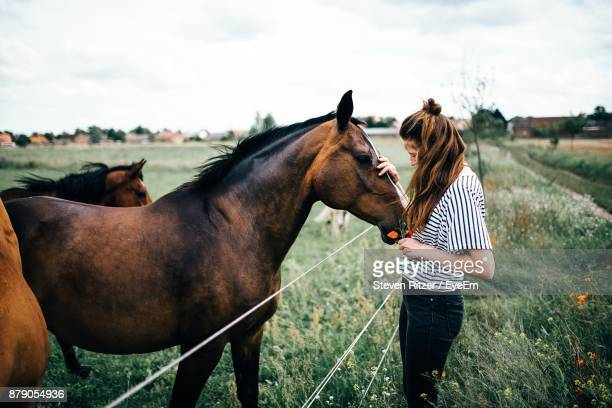 woman touching horse while standing on grassy field - cheval photos et images de collection