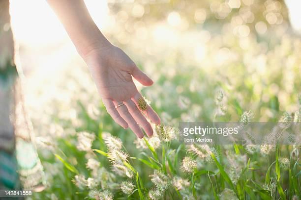 Woman touching stalks in wheatfield
