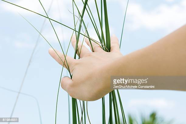 Woman touching tall grass, low angle view, cropped