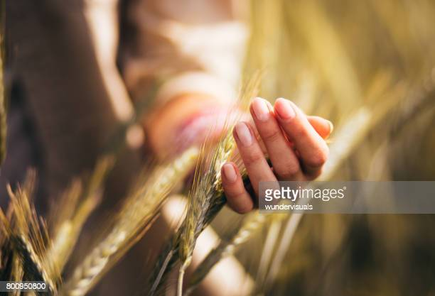 Woman touching the heads of wheat in a cultivated field
