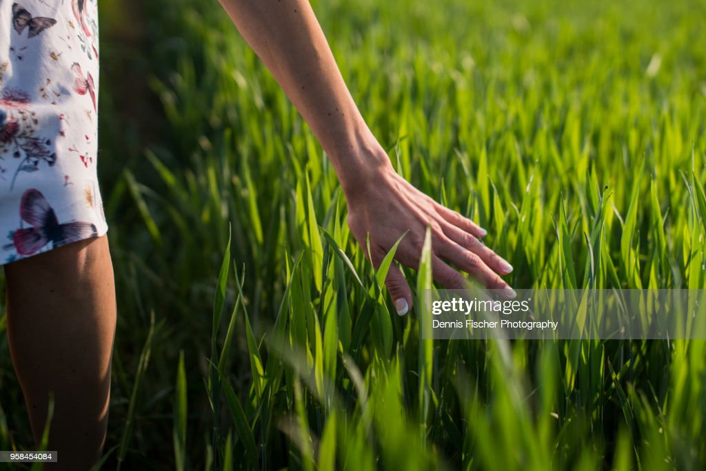 Woman Touching Wheat Plant In Sunset High-Res Stock Photo