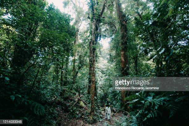 woman tourist into the rainforest - iacomino costa rica foto e immagini stock