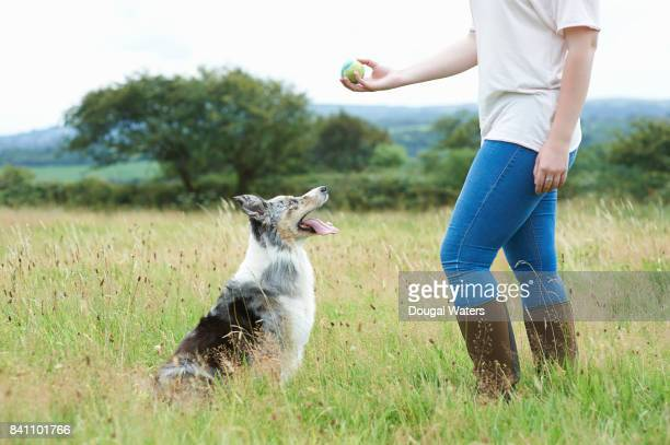 Woman training dog with ball in meadow.