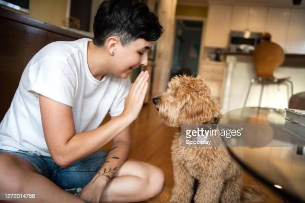 女性はハイファイブを与えるために彼女の子犬を訓練 - 動物芸 ストックフォトと画像