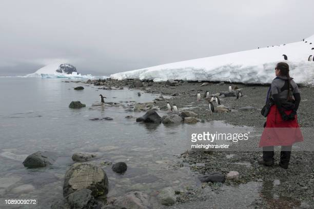 Woman traveler explores Antarctica Danco Island shore gentoo penguins