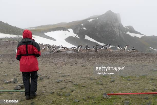 Woman traveler explores nesting gentoo penguin colony Aitcho Island South Shetland Islands Antarctica