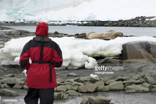 woman traveler watches weddell seal damoy point wiencke island antarctica - milehightraveler stock pictures, royalty-free photos & images