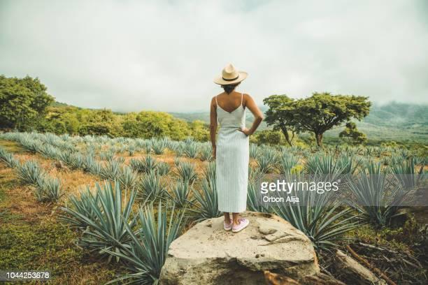mujer en méxico - agave fotografías e imágenes de stock