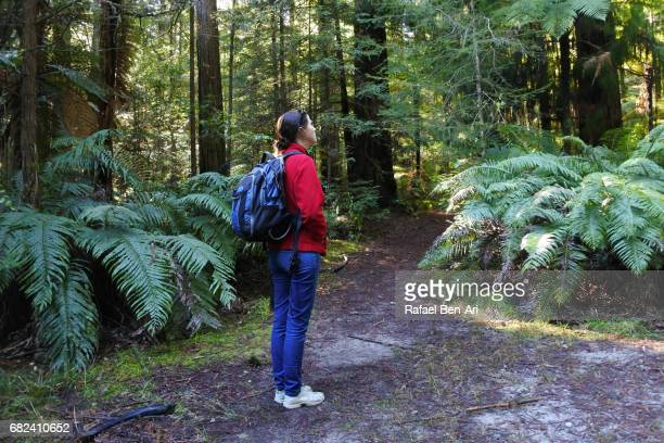 woman travels and hikes in giant redwood forest new zealand - rafael ben ari imagens e fotografias de stock