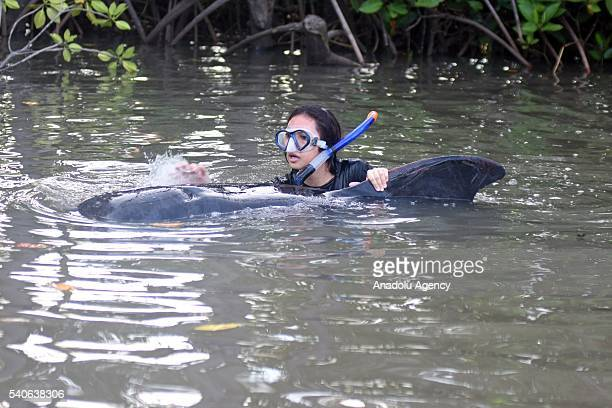 A woman tries to rescue a short fin pilot whale which washed up on Randu Pitu village beach on June 16 2016 in Probolinggo East Java Province...