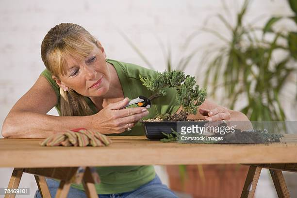 woman trimming bonsai tree - bonsai tree stock pictures, royalty-free photos & images
