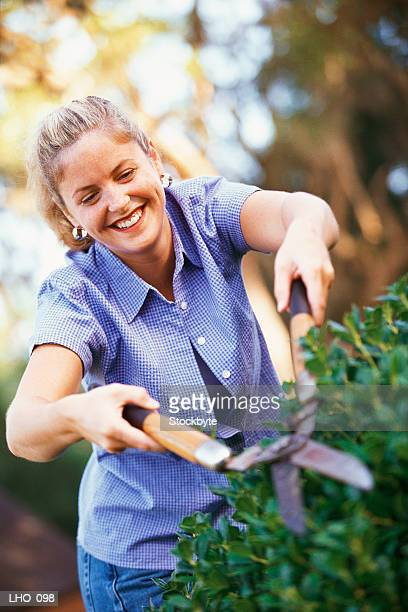 Woman trimming hedge with manual clippers