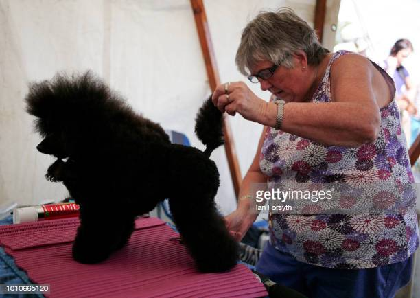 A woman trims her Poodle dog before competing during 152nd the Ryedale Country Show on July 31 2018 in Kirbymoorside England Held in Welburn Park...