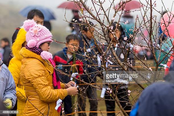 woman tying fortune to blossom tree - merten snijders ストックフォトと画像