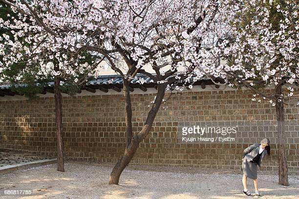 Woman Under Cherry Trees